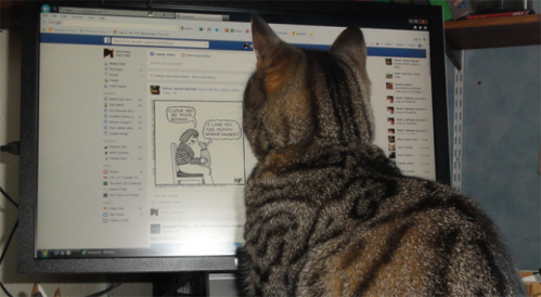 Cats' satisfaction ratings for Facebook were not evaluated. (Bob Avery)